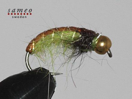 Rhyacophila Goaldhead