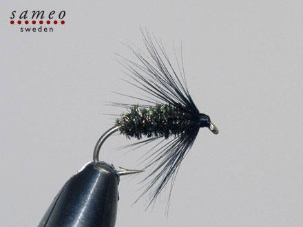 Black Peacock Spider