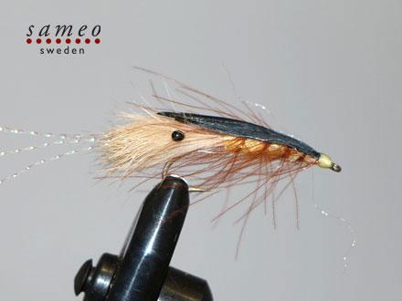 Agerkov mallard shrimp