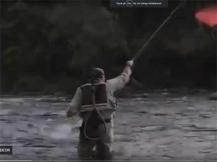 Fiske med czechnymf